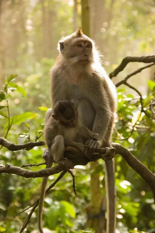 Sacred Monkey Forest Ubud 10 dias en Bali