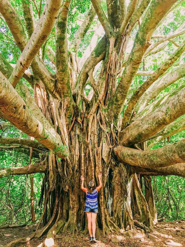 Pipiwai Trail que hacer en Maui Hawaii
