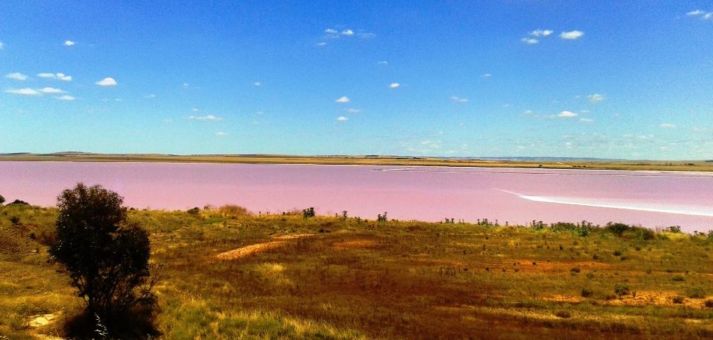 Lake Bumbunga lago rosa de South Australia
