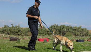 perros que detectan el covid-19