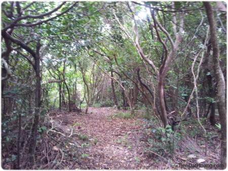 Có những đoạn rừng cây rậm rạp.