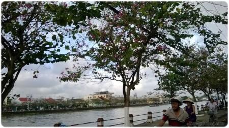 Con đường ven sông, không mộng mơ nhưng có hàng cây đang ra hoa tim tím hồng hồng rất đẹp.