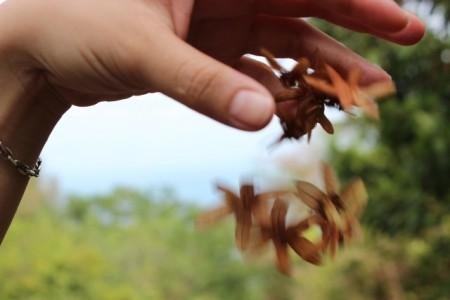 Tấm ảnh mà mình có nhiều cảm xúc: Sao nỡ thả cánh hoa rơi.