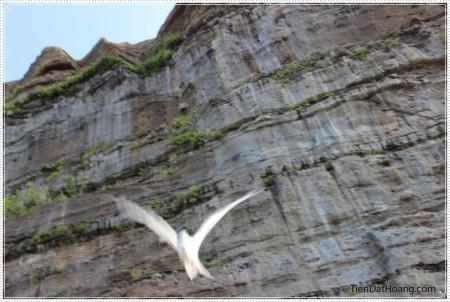 Một chú chim nhạn đang lao xuống phía mình.