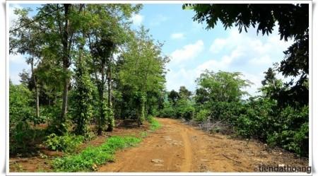 Lạc lối giữa bạt ngàn đất đỏ và cây cà phê.