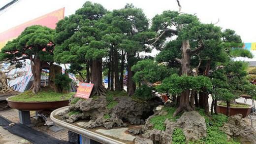 cây cảnh tiếng trung