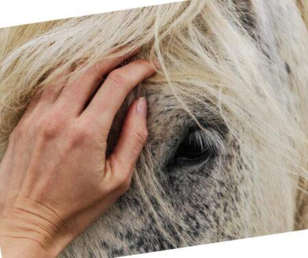 Cropped Pferd Angebote E1596359020880.jpg