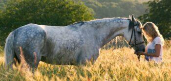 Cropped Pferd Im Feld Scaled 2
