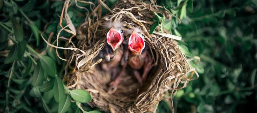 tilt shift photography of birds