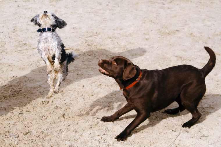 Beschwichtigungssignale der Hunde: Spieleinladung