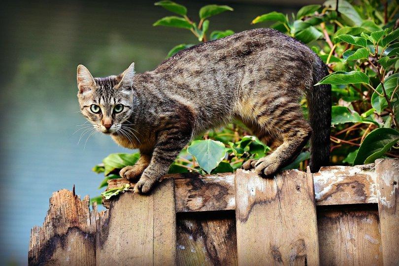 Katze auf Zaun: KATZEN DARAN HINDERN ÜBER DEN ZAUN ZU SPRINGEN