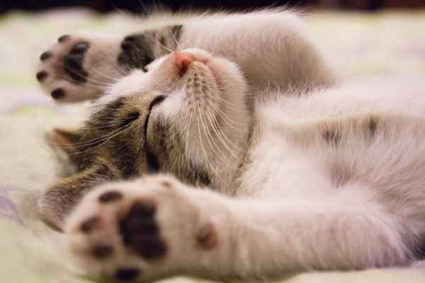 kitten lying on surface