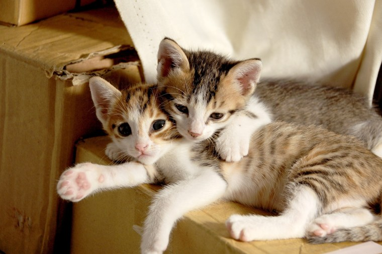 Kitten iin Umarmung