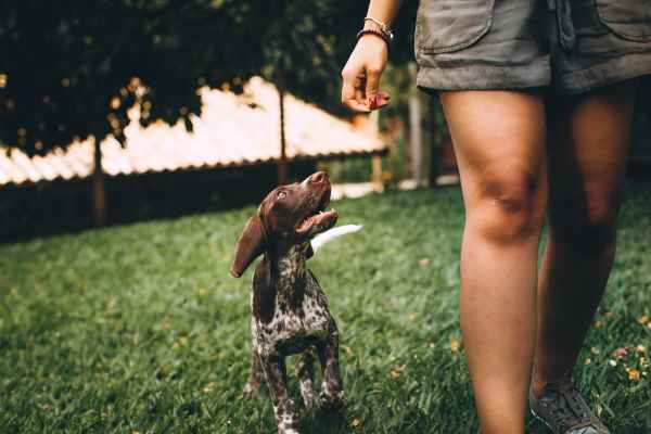 photo of dog and person walking on grass