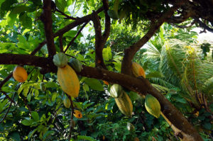 Lombok-Bergdorf-Kakao