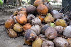 Lombok-Bergdorf-Kokosnuesse