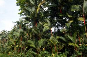 Singapur botanischer Garten (9)