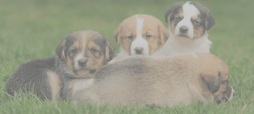 Unsere Tierschutz – Shop Wunschliste