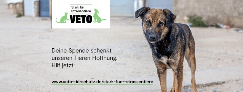 Jetzt geht's los: Mach dich stark für Straßentiere!