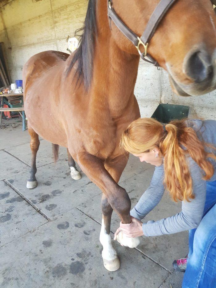 Osteopathie für Pferde 1 1