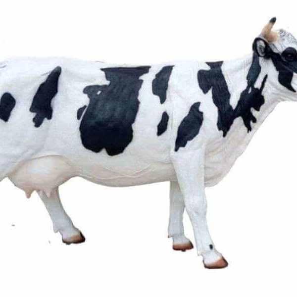 riesige deko kuh aus GFK schwarz weiss