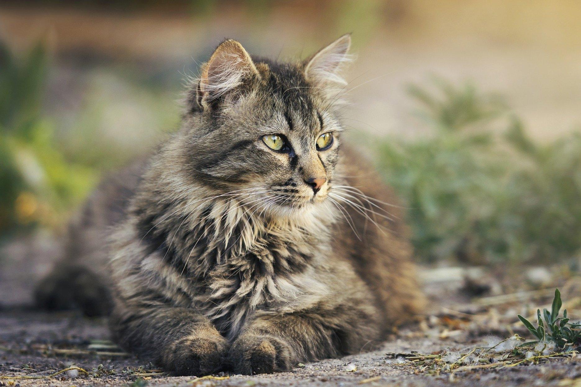 Katzenrucksack
