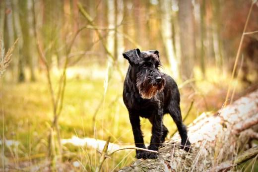 Borreliose beim Hund Wald Feld und Wiesen