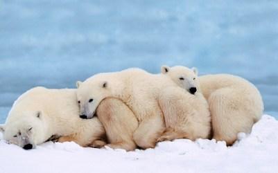 Drei Kuschelbären im Schnee.