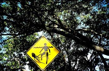 Warnschild Seewespe, Badestrand in Australien.