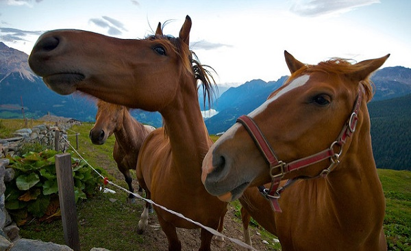 Pferde sehen unscharf aber dafür schnell.