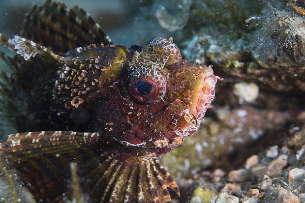 Giftige Fische