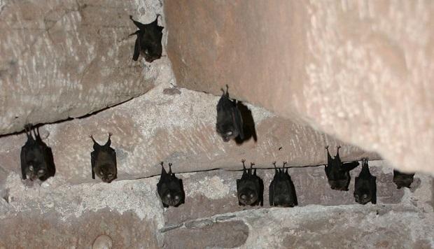 Nachtaktive Tiere