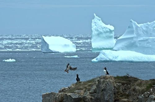 Vögel in Polargebiete