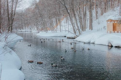 Viele Entenarten sind bei uns Wintergäste