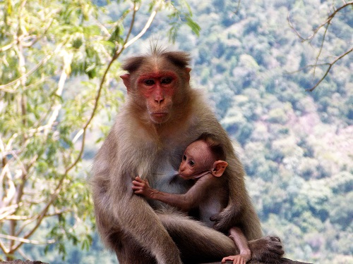 Muttertier mit Junges
