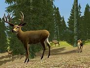 juego de caza