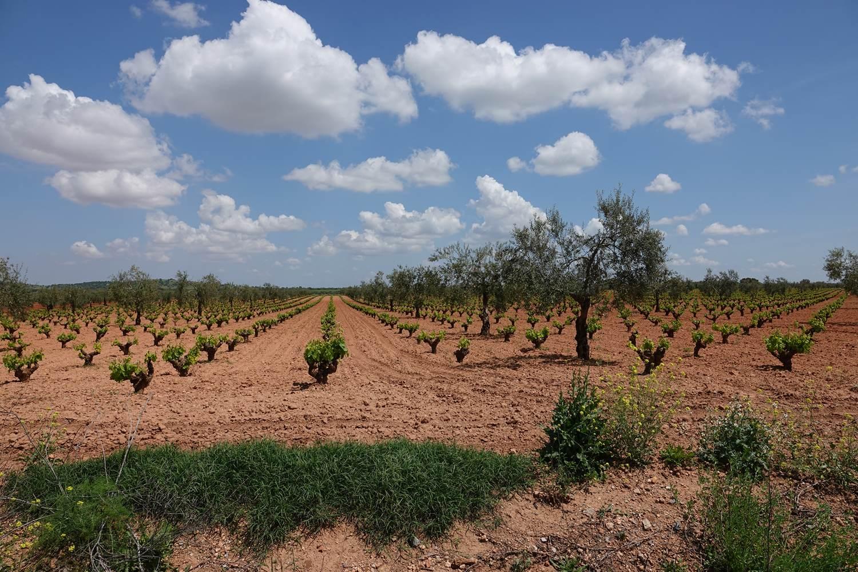Op vakantie in Extremadura genieten van de lokale producten wijn, kaas, olijfolie