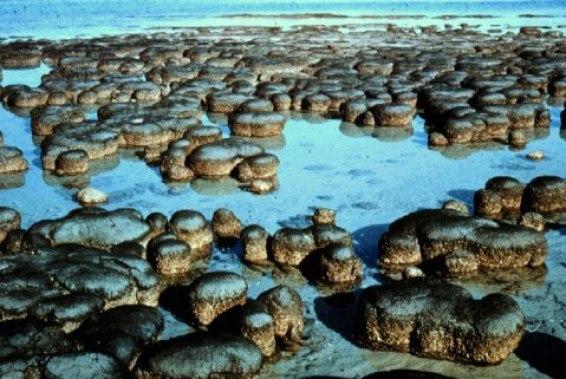 Estromatolitos actuales