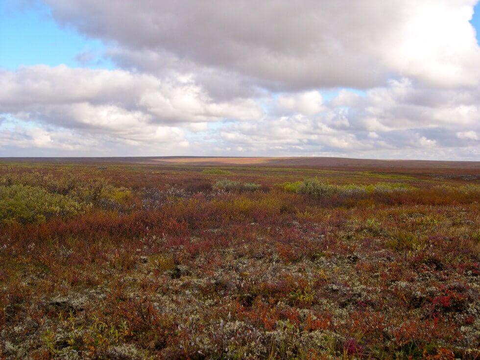 Tundra Rusa
