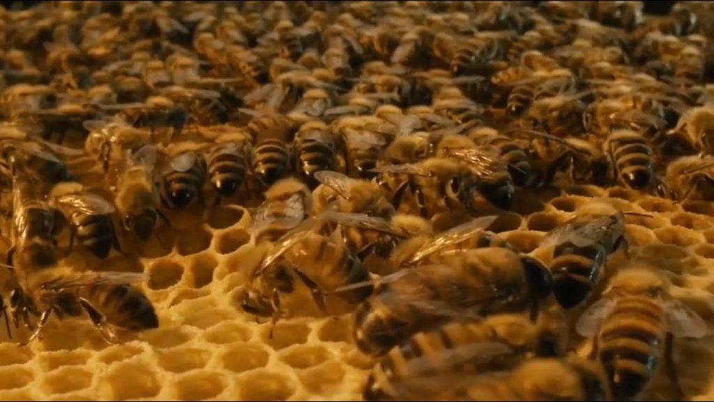 Las abejas NO se extinguen por la leche de almendras