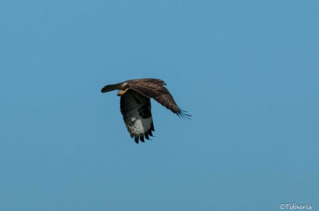 Buse variable 2