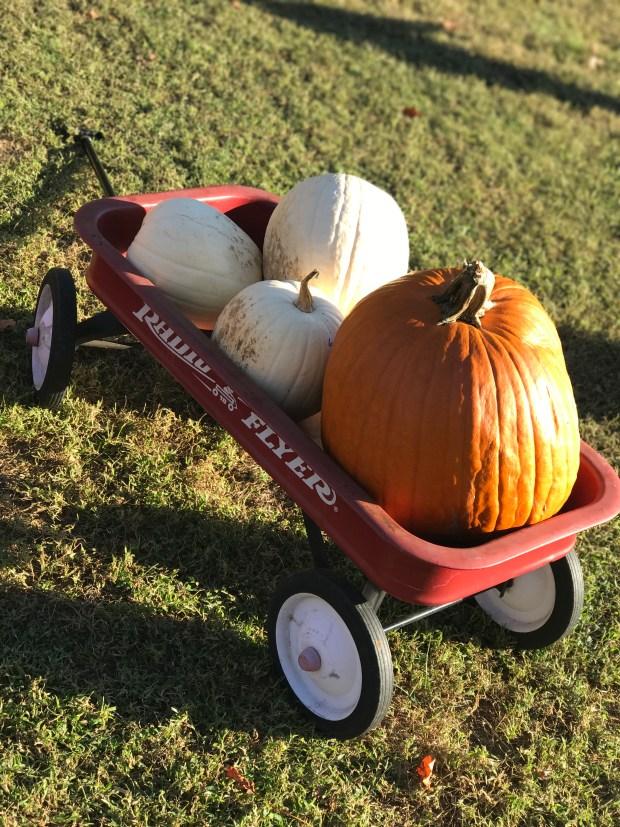 Pumpkin Patch Visit - Annapolis