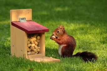 bird meal animal squirrel