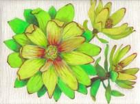 Leaucadendron