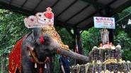 Female elephant Mo Mo eats a cake made of fruits, vegetables and sugar canes during a ceremony to mark her 62nd birthday at the Yangon Zoological Gardens Sunday, Oct. 18, 2015 in Yangon, Myanmar. The pachyderm originally from Myanmar's eastern Kayah state was brought to the zoo in 1961 when she was seven-year-old. Mo Mo is one of the most popular animals at the more than 100-year-old zoo and she entertains children by her weekly performances. (AP Photo/Khin Maung Win)