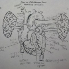 Pig Heart Diagram Interior Seymour Duncan Wiring Diagrams Stratocaster I Break Open Hearts On Valentines Day