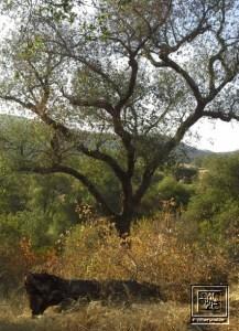Daley Ranch in Escondido, CA
