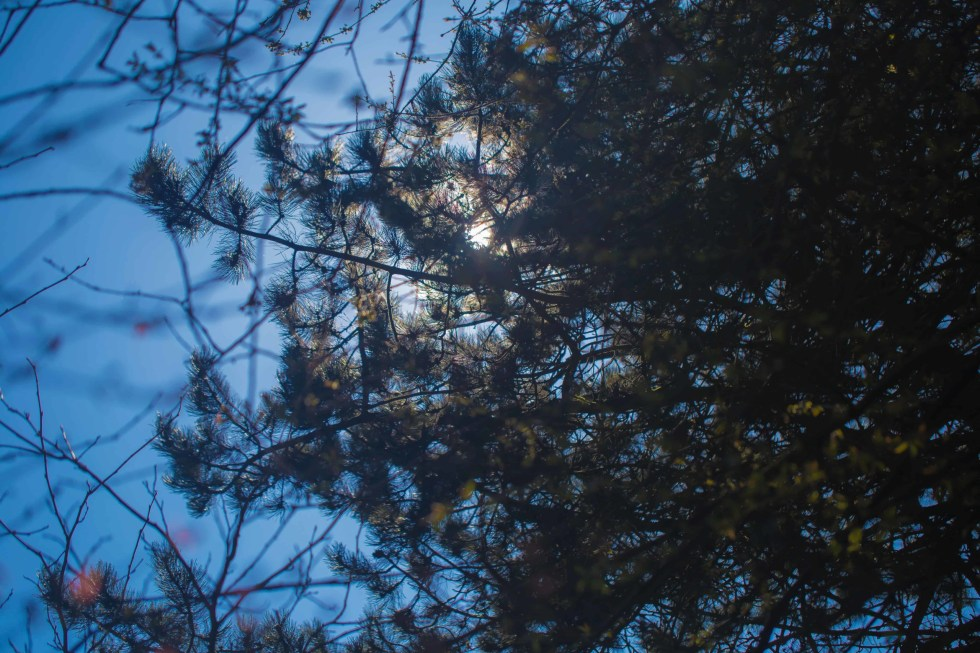 picture of the moon through trees.