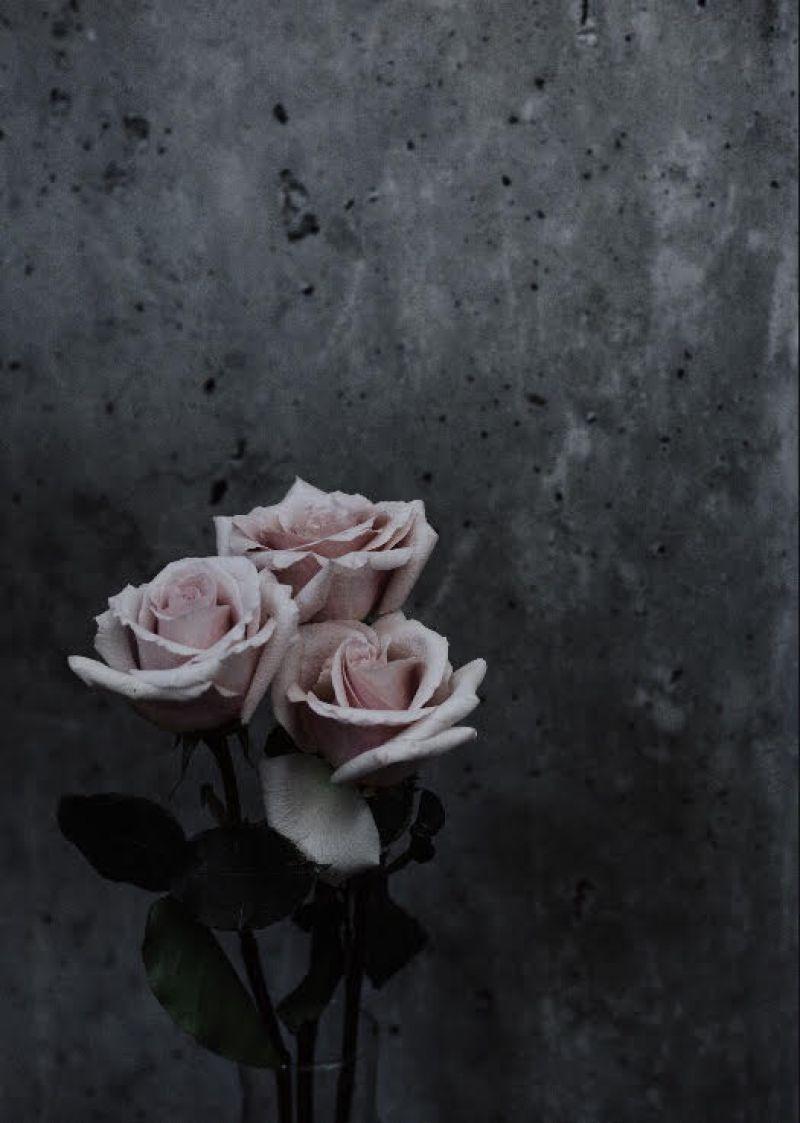3 pink roses in vase against grey background