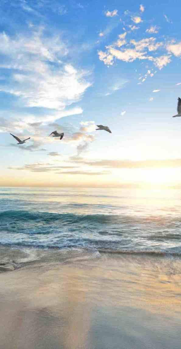 Birds flying over a beach